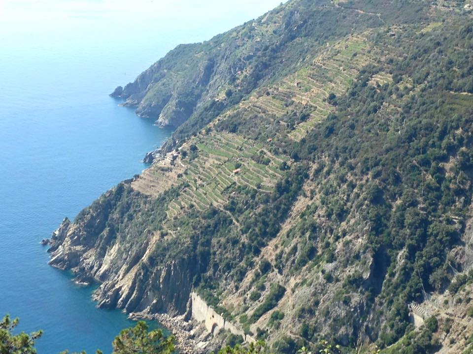 Liguria, Cinque Terre, steep slopes